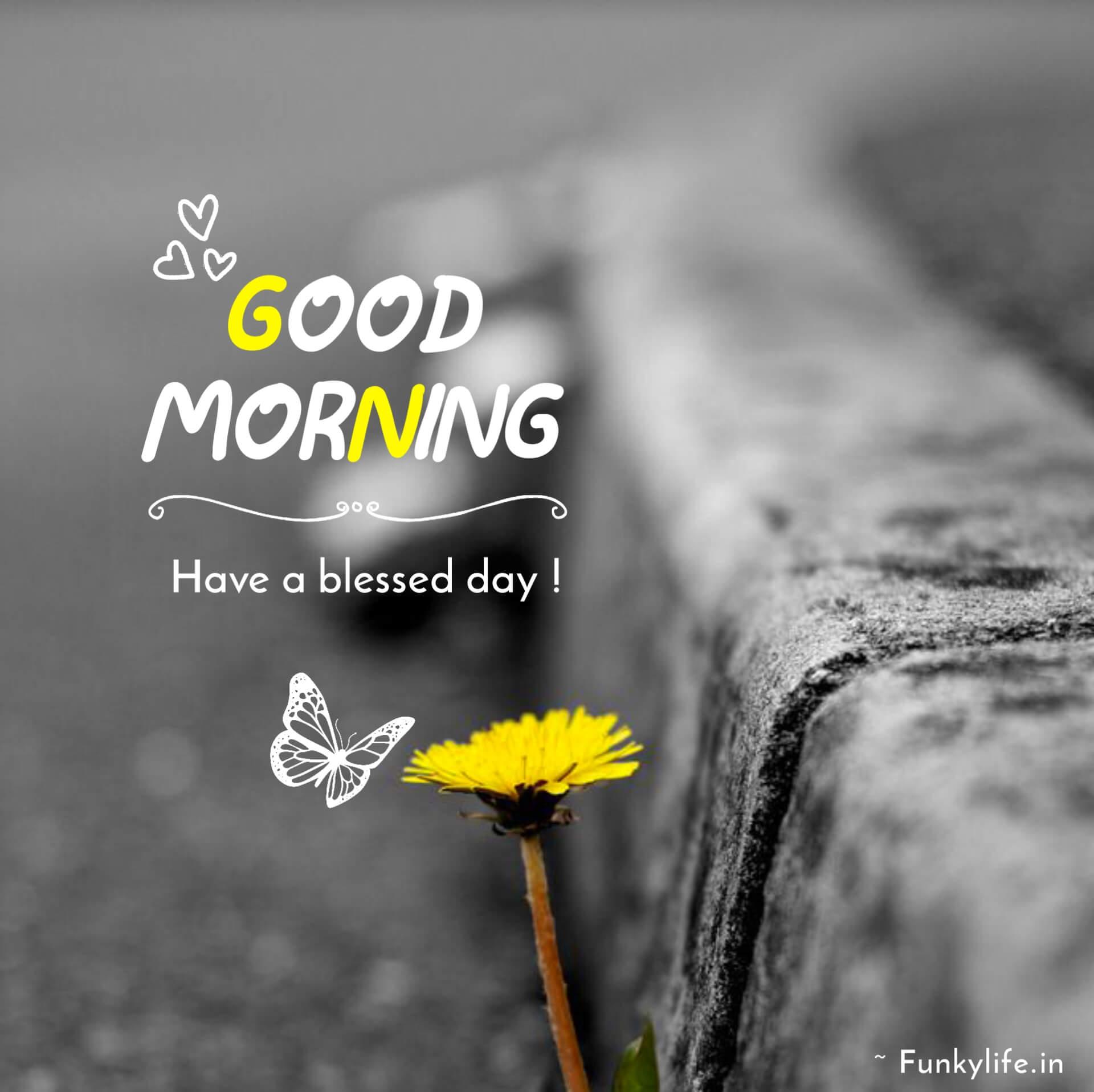Good Morning SMS Photos