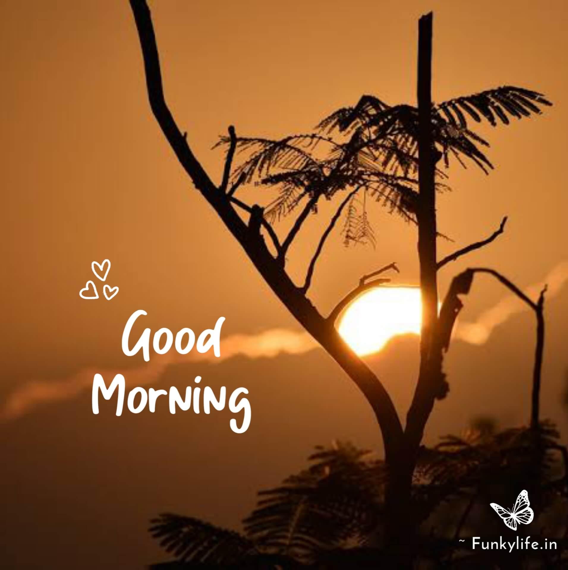 Sunrise Good Morning image