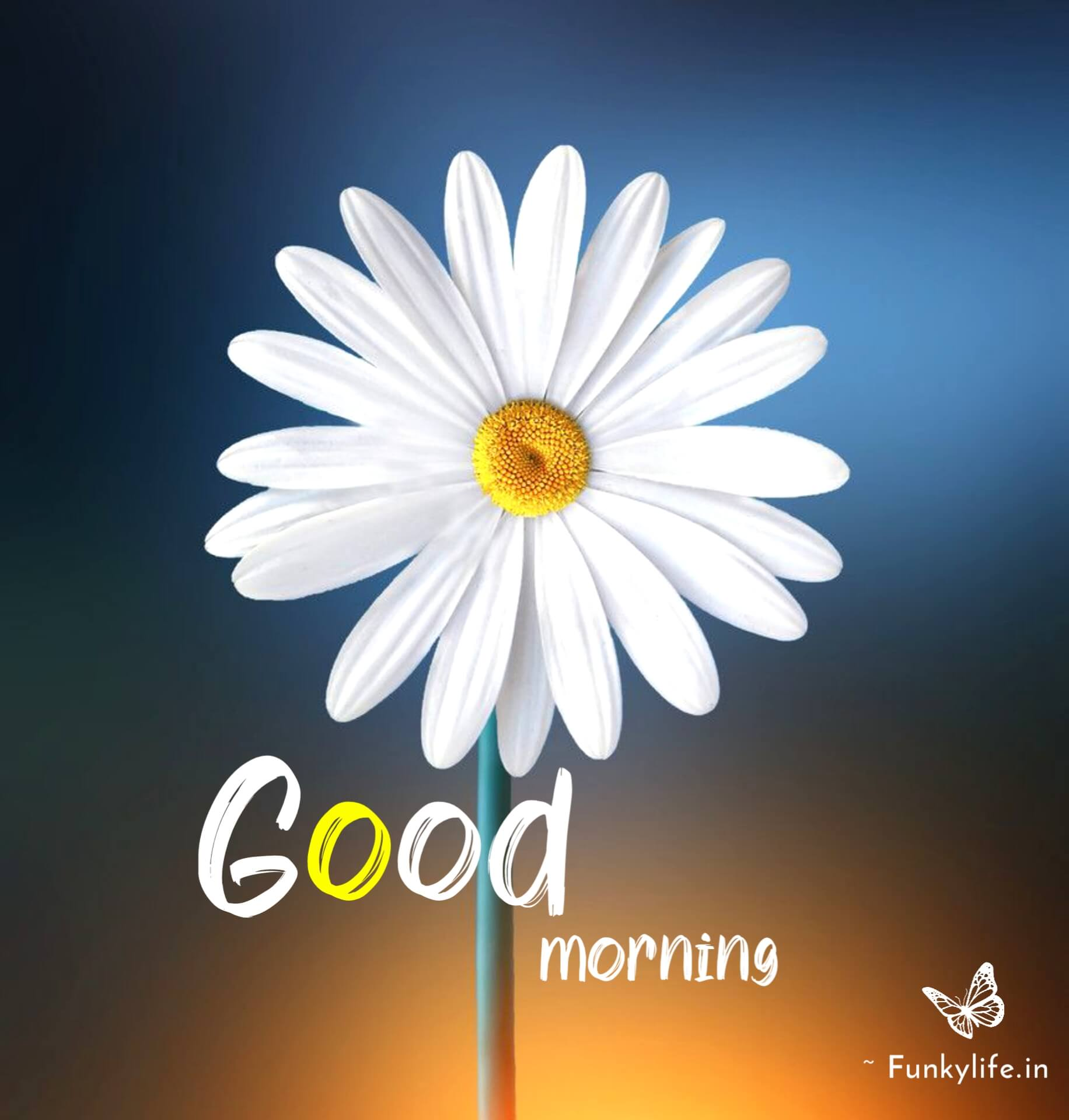 New Good Morning Images