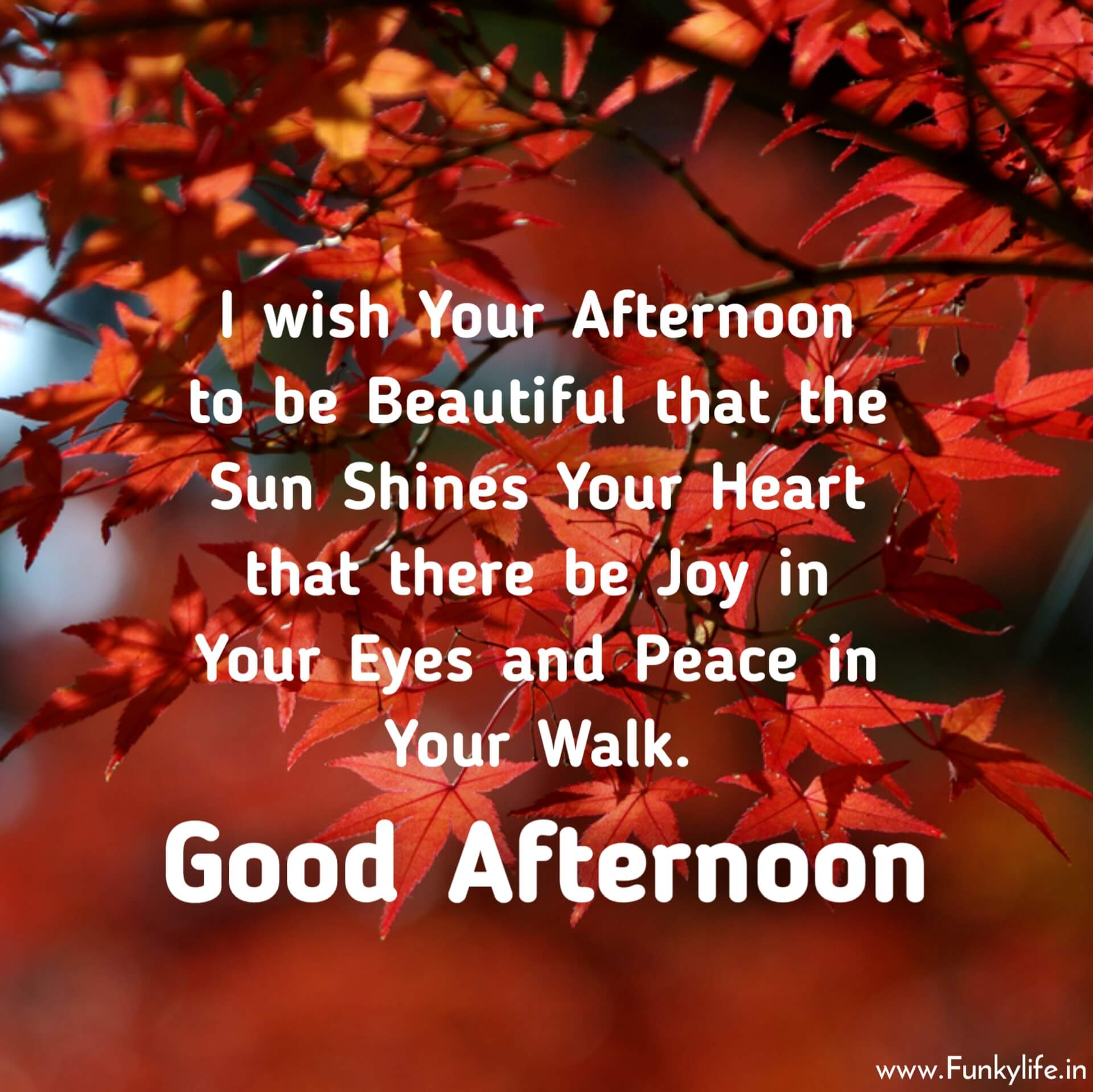 Beautiful Good Afternoon Images with Quotes