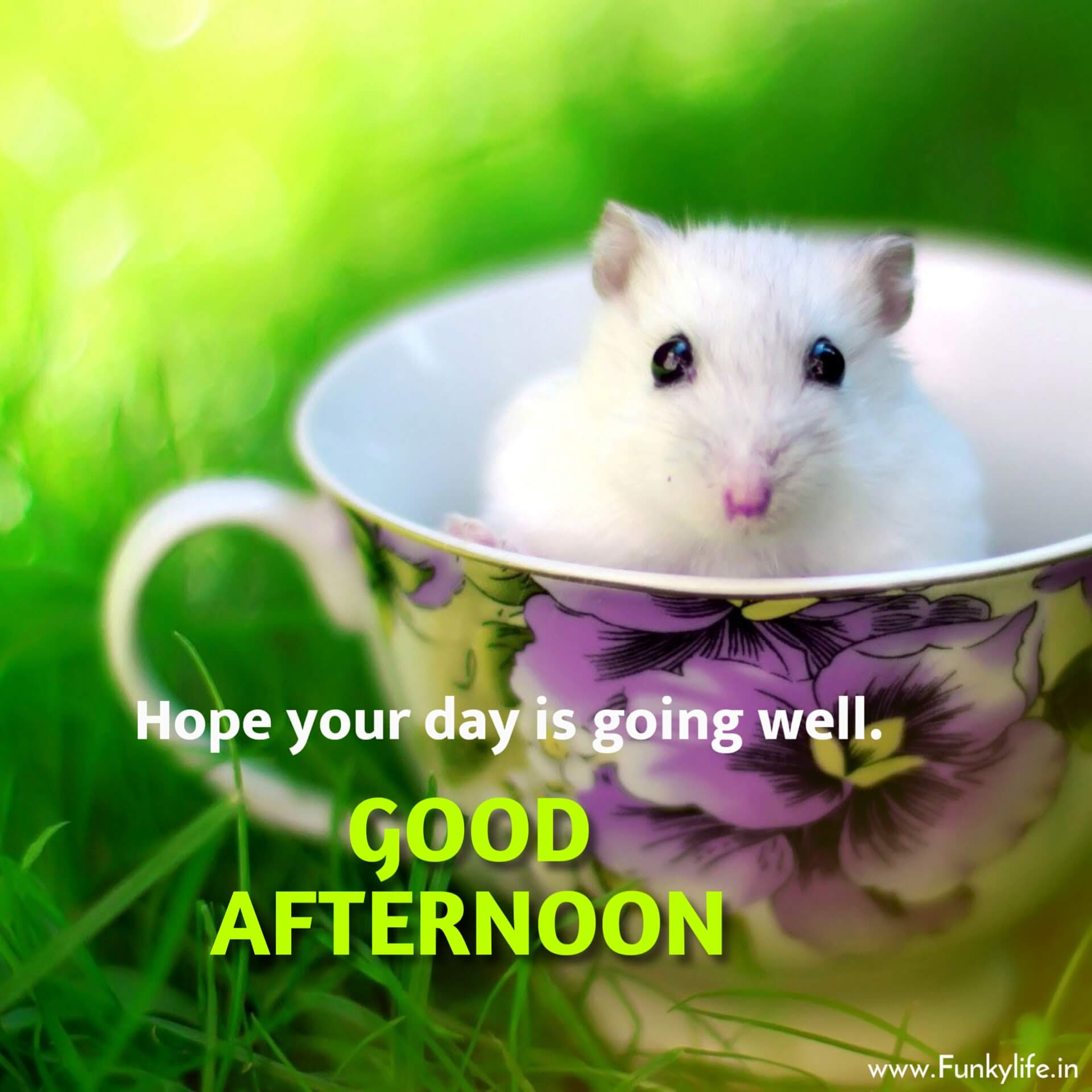 Cute Rat Good Afternoon Image