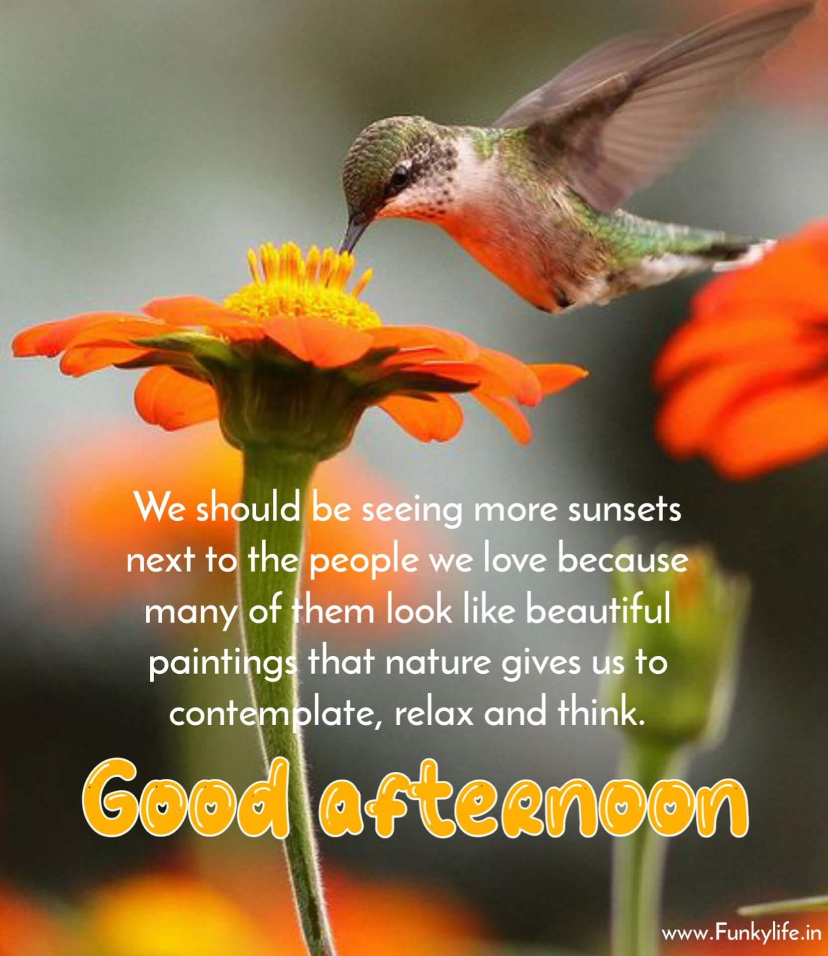 Loving Good Afternoon Images with Quotes