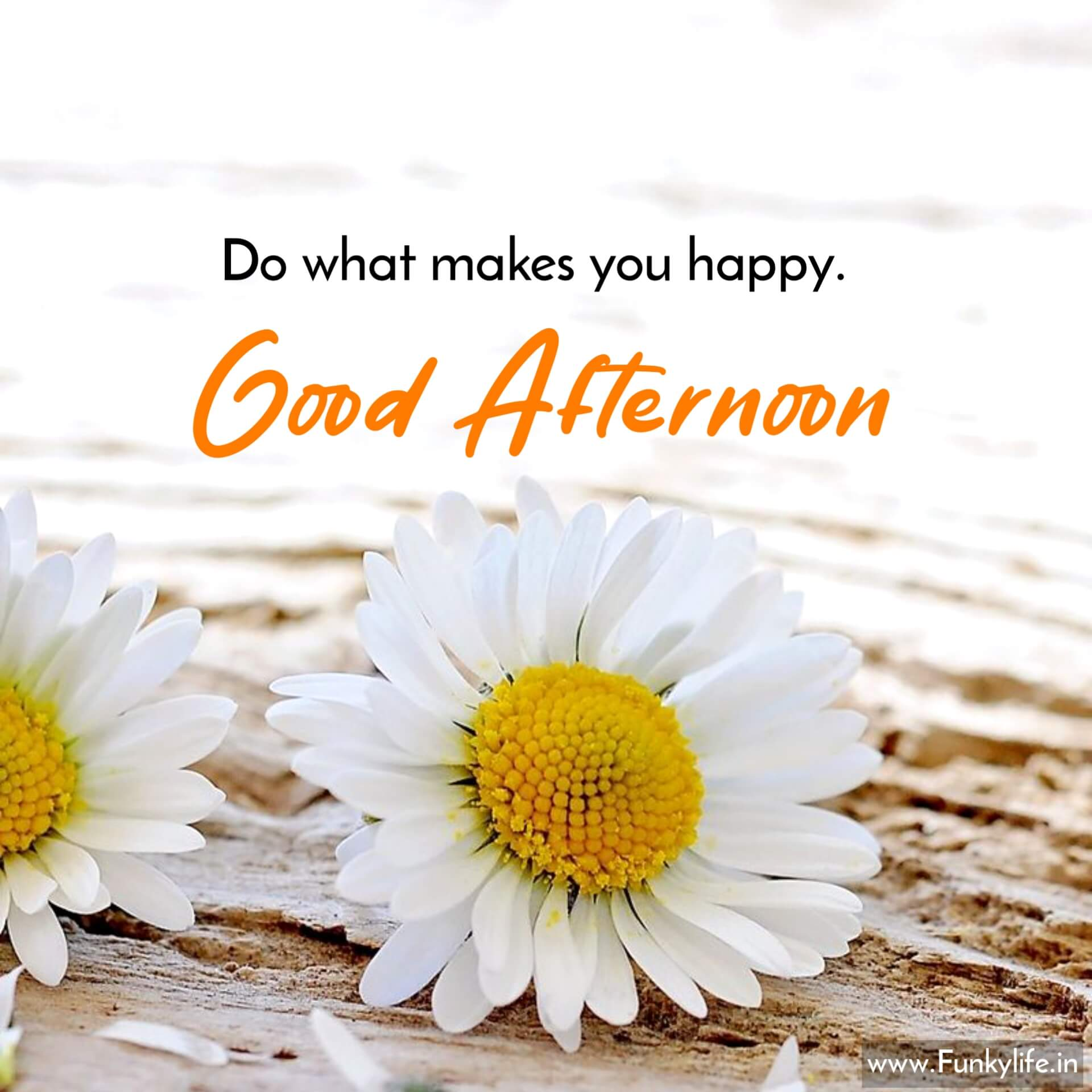 Best Afternoon Wishes