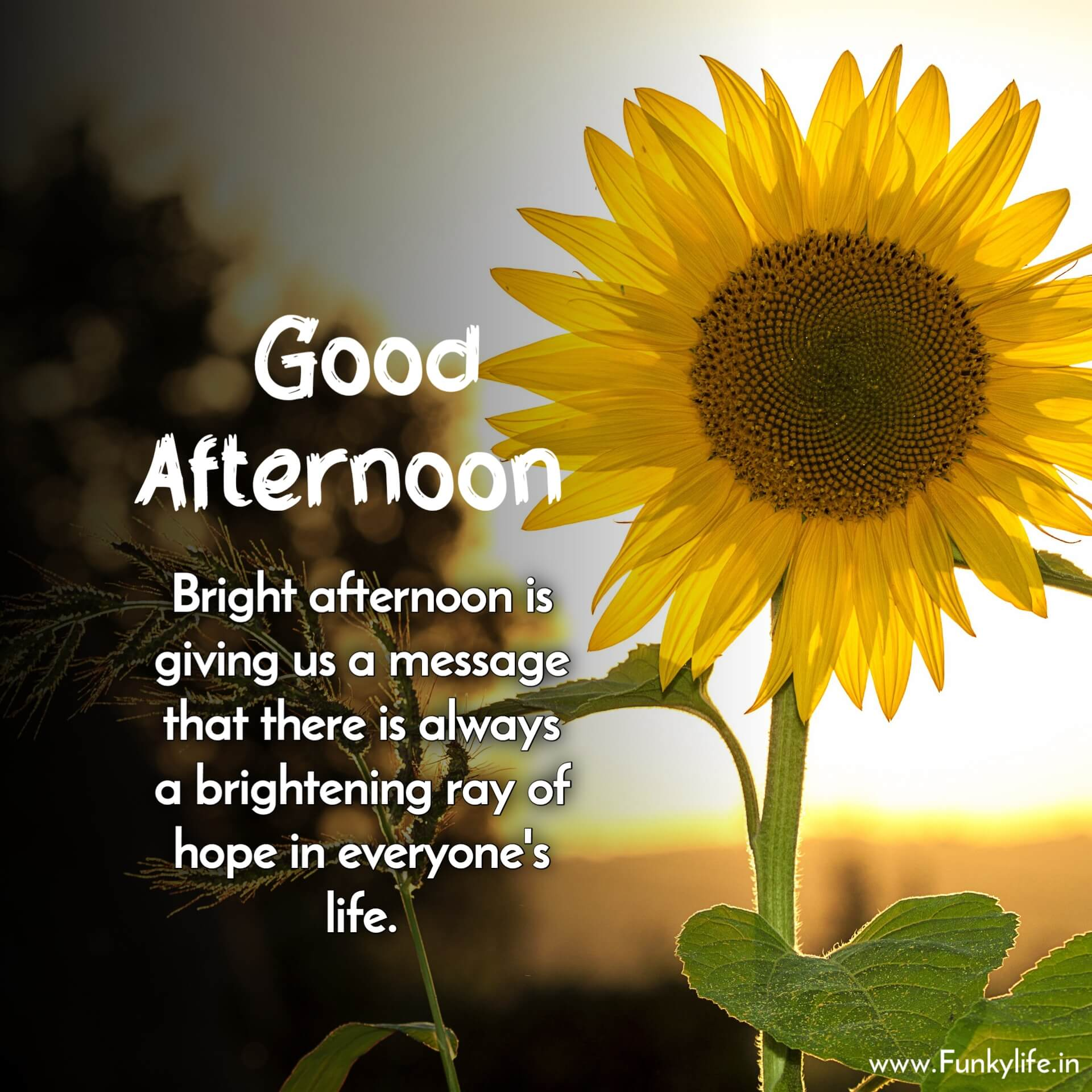 Good Afternoon Message Images with Quotes