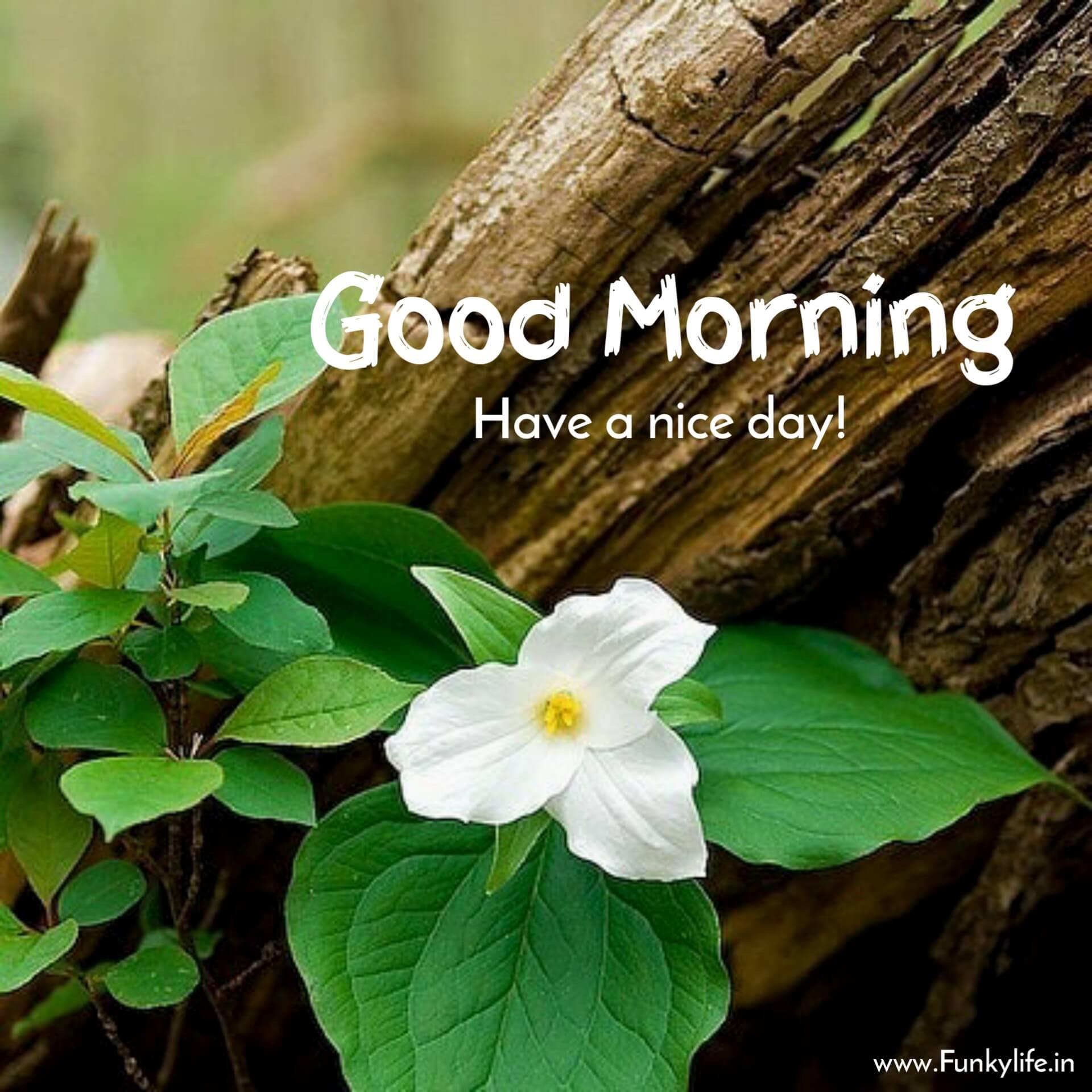 Nature flower good morning pic