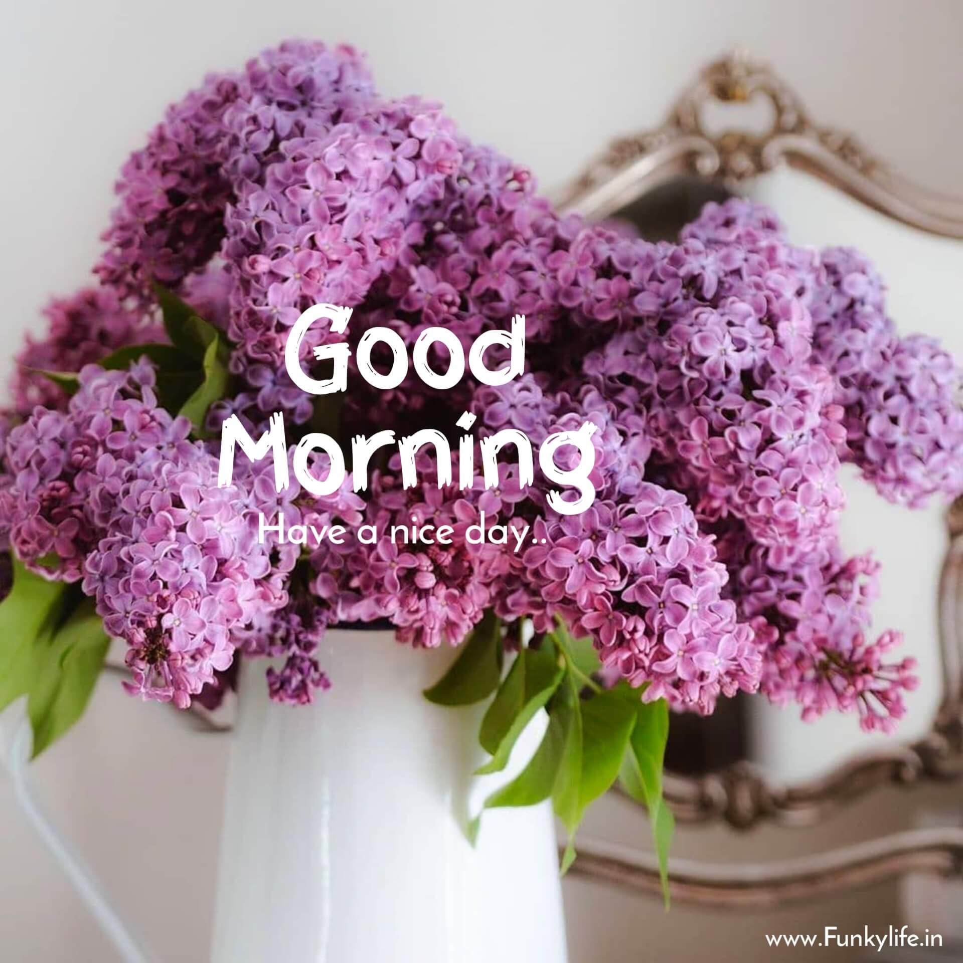 A beautiful flower for morning