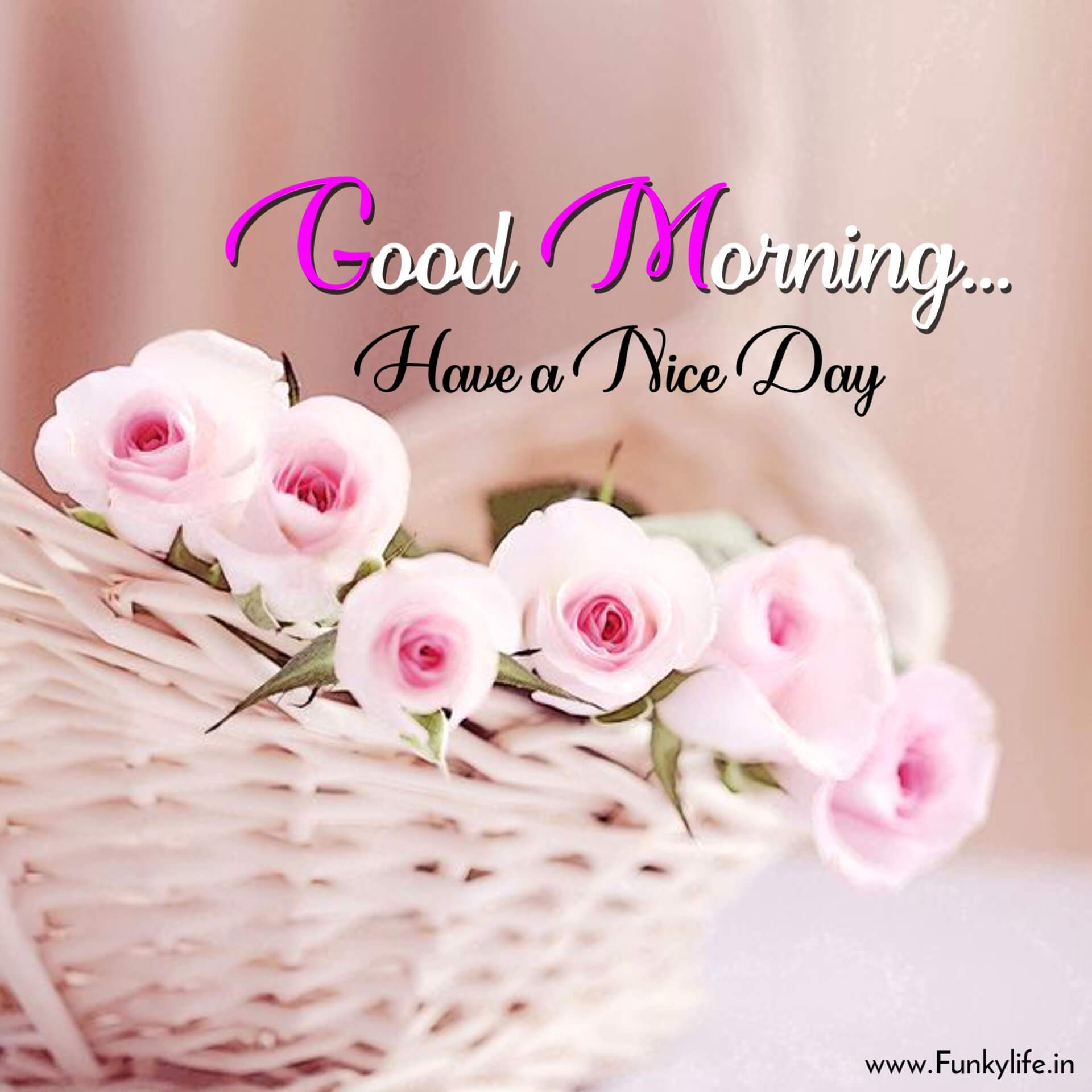 Cute Flower Morning Wish Pic