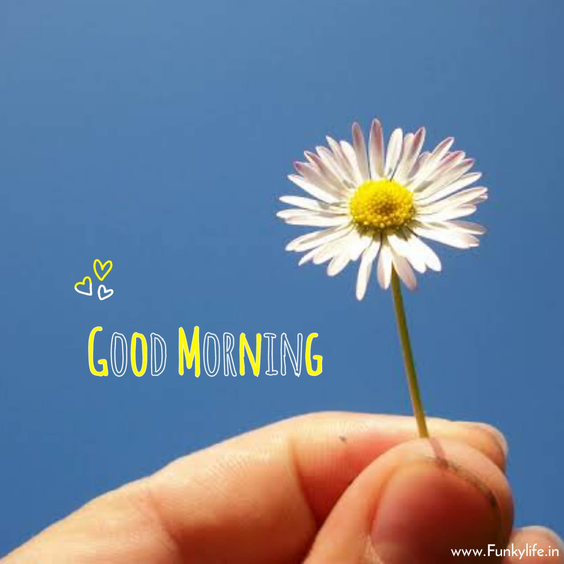 Different Good Morning Pic