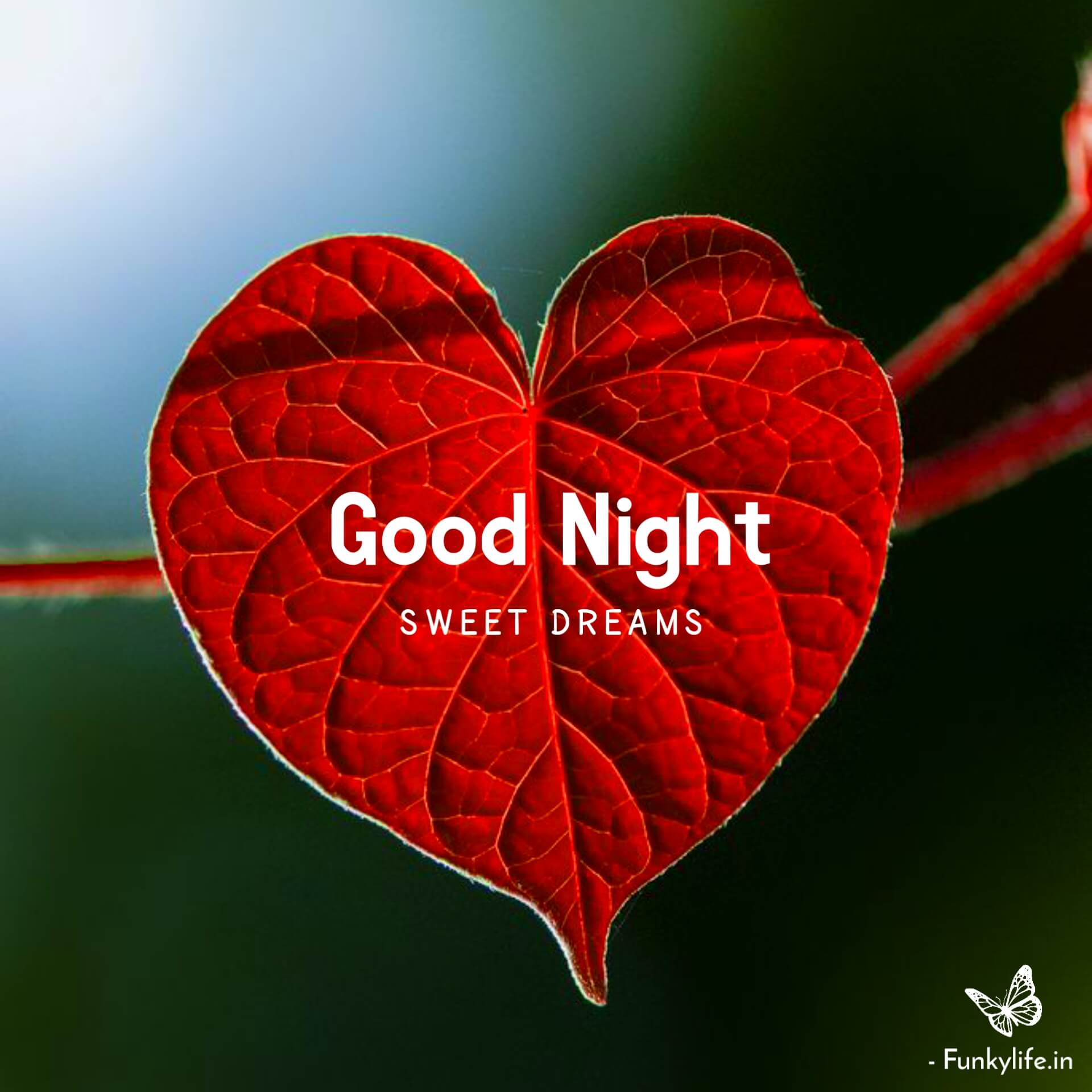 Good Night Simple Picture