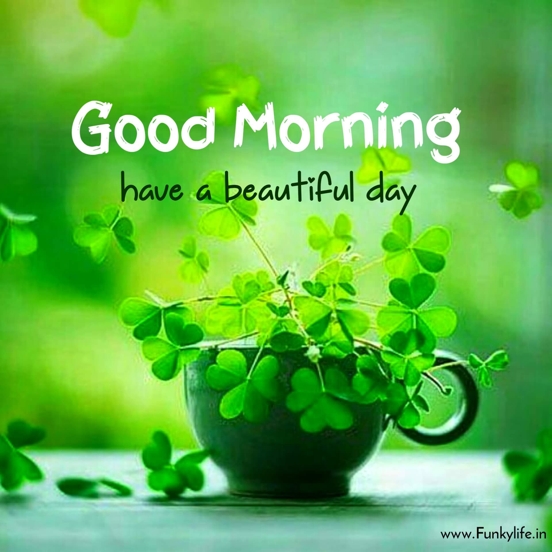 Green Plant Good Morning Images
