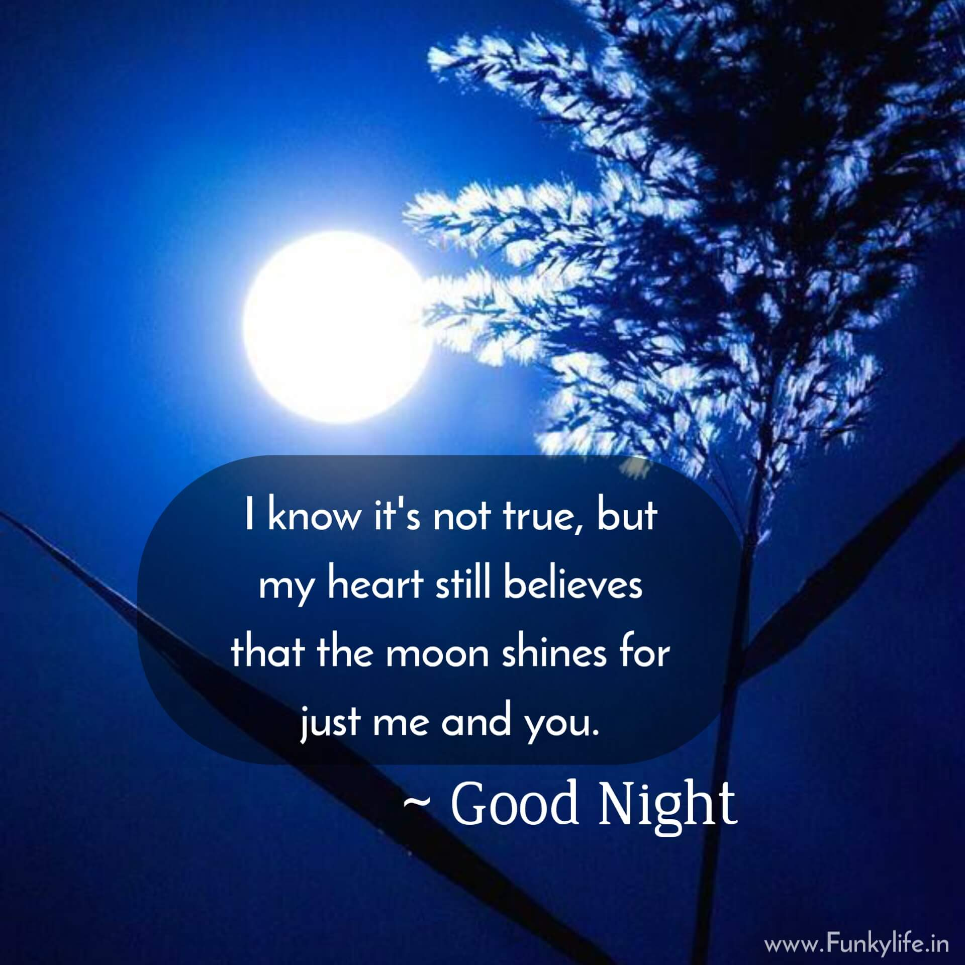 Beautiful Good Night Quotes with Images